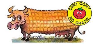 """Questione OGM: ogni stato membro dell'Unione Europea sarà """"libero"""" di decidere sulla questione."""