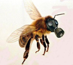 Bees-addiction-on-neonicotinoid-like-humans-on-nicotine
