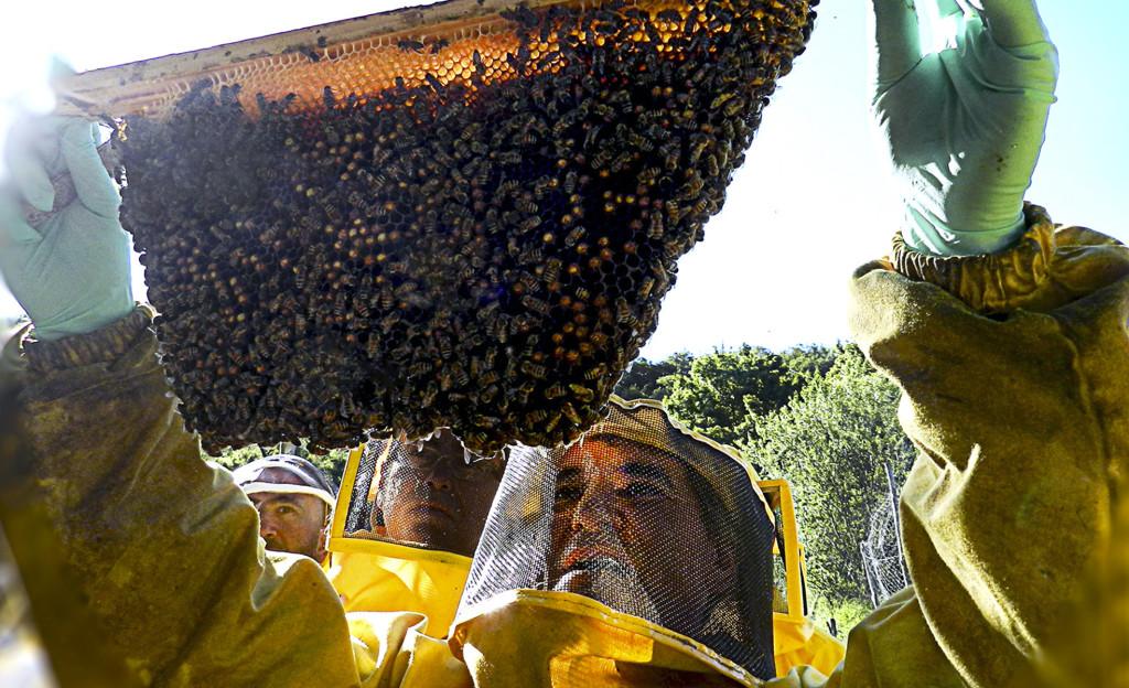 apicoltore-piano