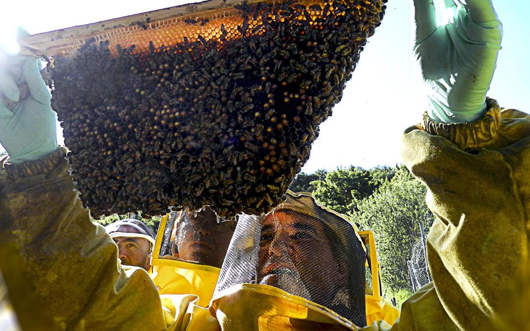 Gli apicoltori sfidano l'UE e la Dow Chemical