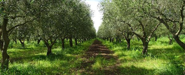 AIAB Calabria – PrimaveraBio!