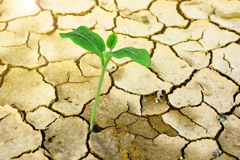 SICCITÀ: BASTA PAROLE, SOSTENIAMO il bio come unico modello di contrasto ai cambiamenti climatici