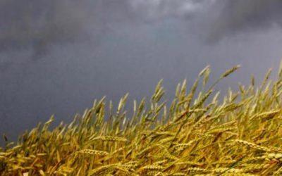 CETA: se passa mangeremo pasta al glifosato e carne agli ormoni. L'Italia deve rigettare il trattato