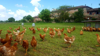 Zootecnia Bio Parte Un Progetto Che Punta Al 100 Di Mangimi Bio Associazione Italiana Per L Agricoltura Biologica