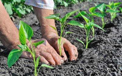 Sostenere il biologico: opportunità di accesso al credito e soluzioni per il futuro – Webinar 16 luglio