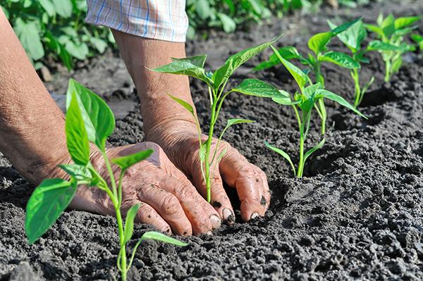 Biofach: più agricoltori bio, più terra, mercato mondiale in crescita