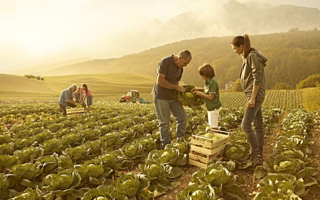 Agricoltura e Politica: la grande occasione mancata