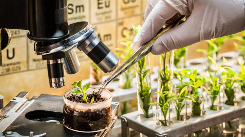 New Breeding Techniques: Sono come gli OGM