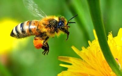 Basta moria di api: Greenpeace e il mondo ambientalista e biologico chiedono la messa al bando dei pesticidi