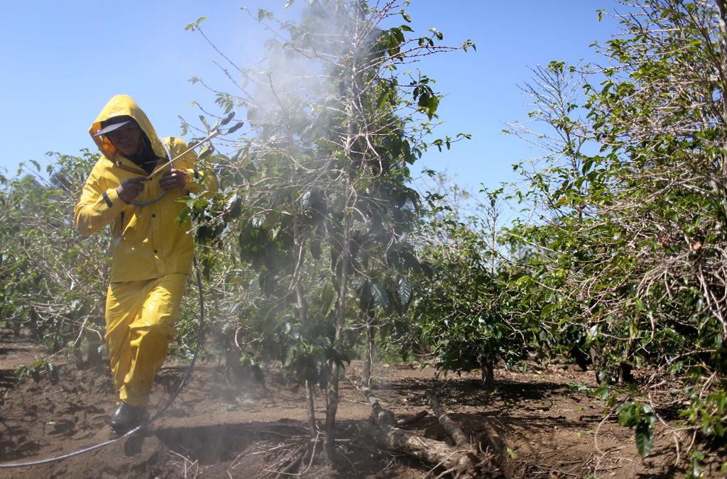 """Divieto Ue ai neonicotinoidi: """"è l'ora della svolta agroecologica e del biologico"""""""