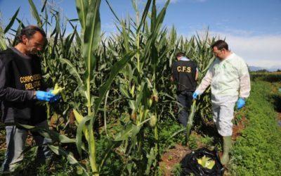 OGM sono solo folklore, bene l'intervento del MIPAAF ma adesso basta