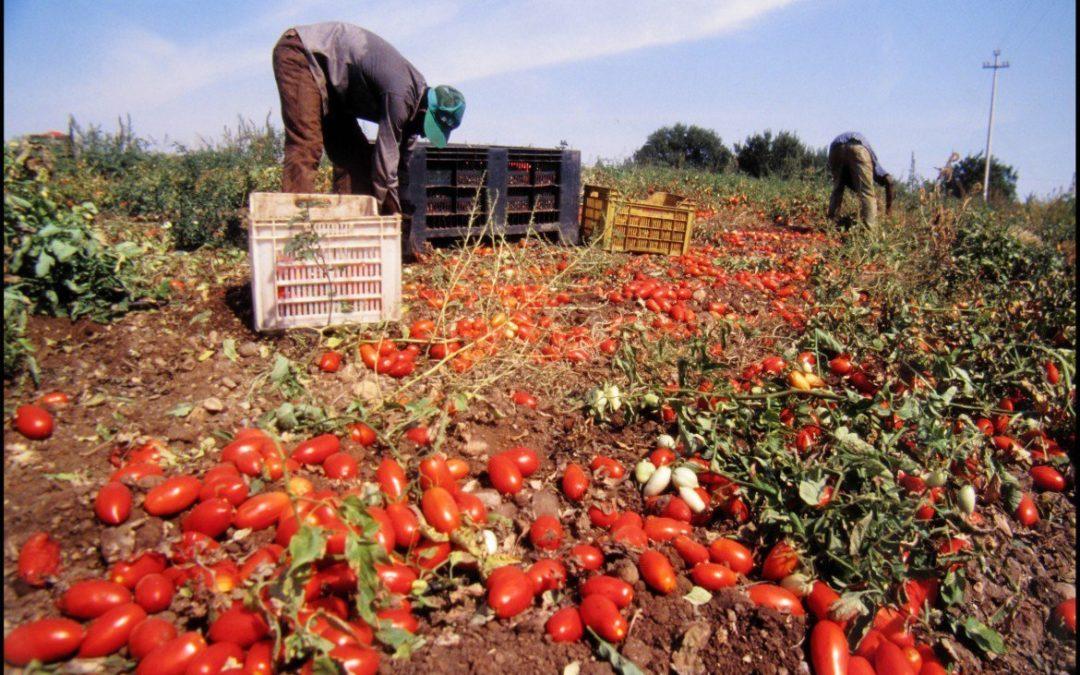 Migranti che muoiono per produrre le nostre eccellenze agroalimentari