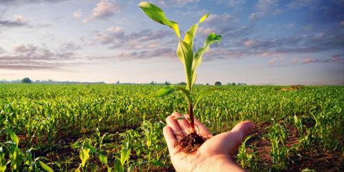 Calabria: a rischio il sostegno economico ad oltre 4 mila aziende biologiche