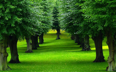 Aiab e PurProjet insieme per la riforestazione dell'Italia