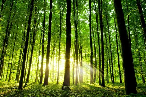 AIAB e PEFC Italia insieme per la sostenibilità delle imprese agricole e boschive e per contrastare la produzione di imballaggi inquinanti