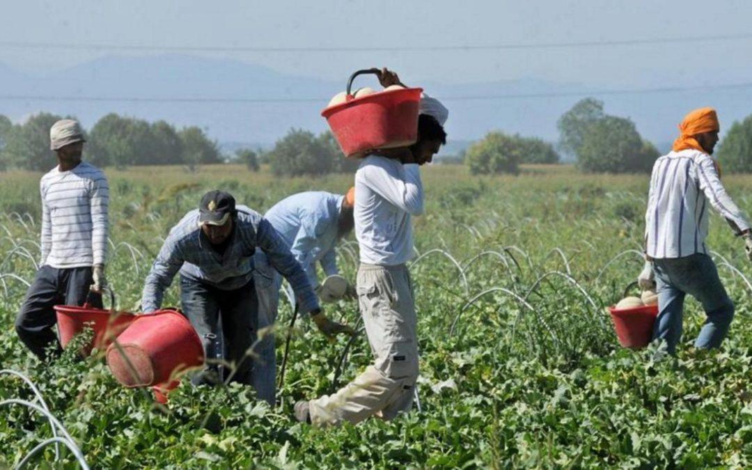 Caporalato, sfruttamento e aste doppio ribasso: agricoltura protagonista in Rai. Legge da approvare con urgenza