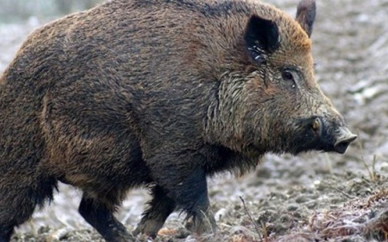 Fauna selvatica: tempo (purtroppo) scaduto. La politica ora deve mitigare i danni