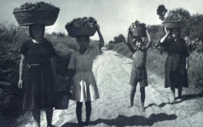 Agricoltura sociale come strumento di sviluppo del territorio