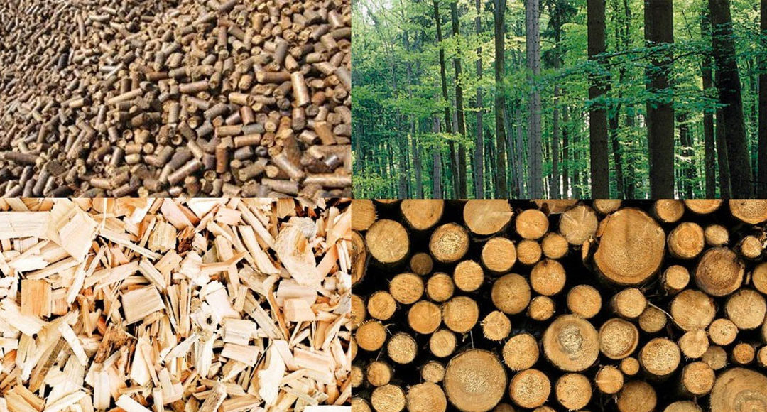 Energia da biomasse? Non è rinnovabile e non può godere di incentivi pubblici