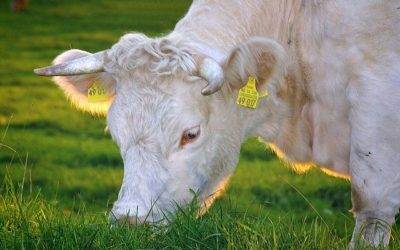 Organic Farm knowledge, le novità.