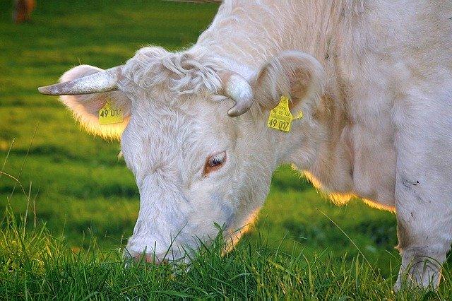 Da Ok Net Ecofeed novità sull'approvigionamento di mangimi bio