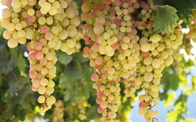 Prove sperimentali viticoltura e frutticoltura biologica – Fondazione Edmund Mach 6 agosto dalle 9 alle 17