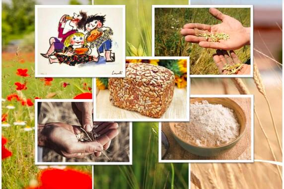 Indagine FIRAB su omologhe filiere cerealicole CONSEMI