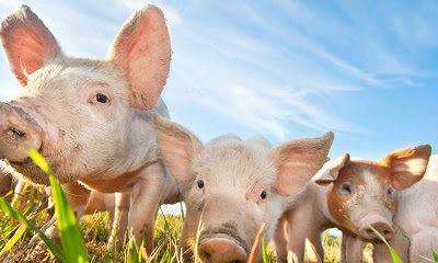 Benessere animale: Aggiornamenti sul progetto PPILOW