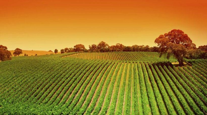 Pubblicato in Gazzetta Ufficiale il D.M. fosfiti in agricoltura biologica
