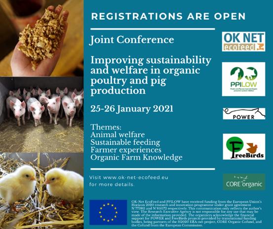 Migliorare la sostenibilità e il benessere nella produzione di avicoli e suini biologici: conferenza online 25 e 26 gennaio
