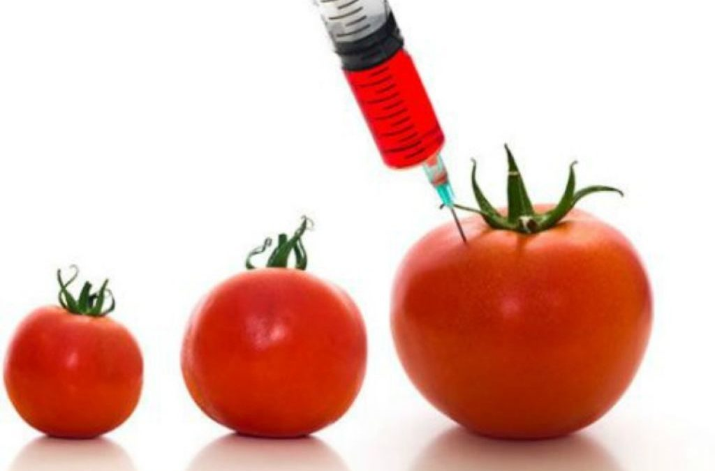 Aprire agli OGM? No grazie!