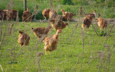 Organig Farm Knowledge: Formulare il mangime usando un software di calcolo, il 18 marzo evento formativo