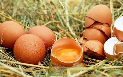 PPILOW: una recente pubblicazione sulle sfide dell'industria delle uova da tavola nei prossimi decenni