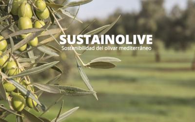Sustainolive:  I campionamenti negli uliveti delle due aziende toscane